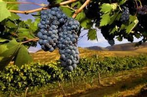 Wine Tours Limousine Oregon